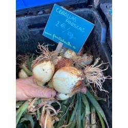 Cebollas frescas blancas